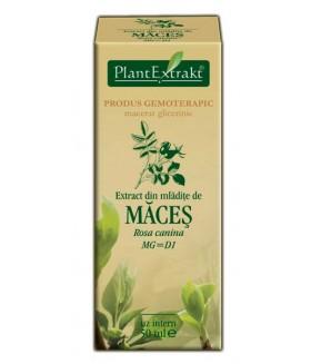 Extract mladite maces x 50ml (PLX)